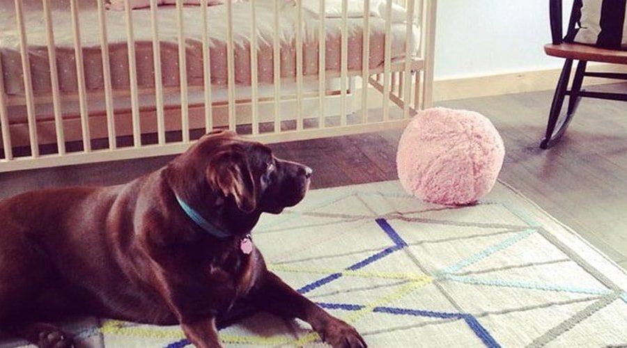 chien sur un tapis avec une bassinette