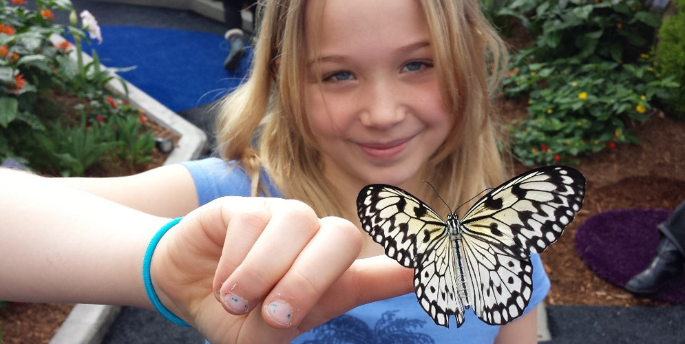 papilllon page ouverture agatha